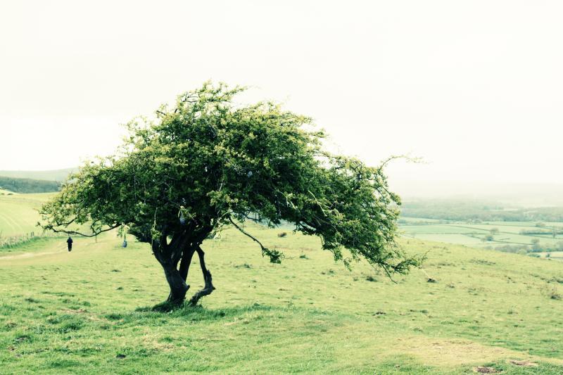 tree_bn